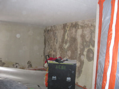 Black Mold Remediation Company for Commercial and Residential Buildings