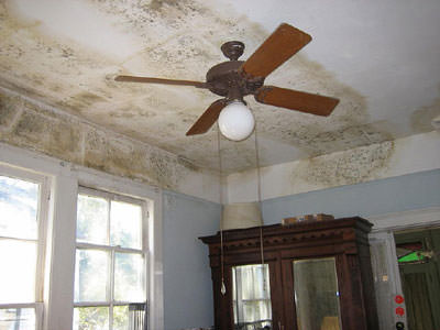 Mold Removal Company in St. Louis, St. Charles, & Columbia, Missouri